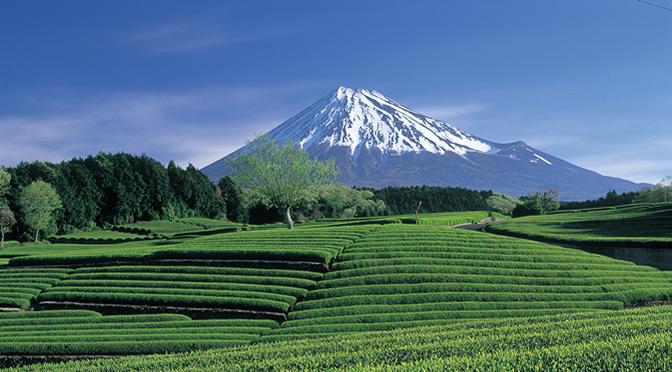 静岡県・茶畑と富士山